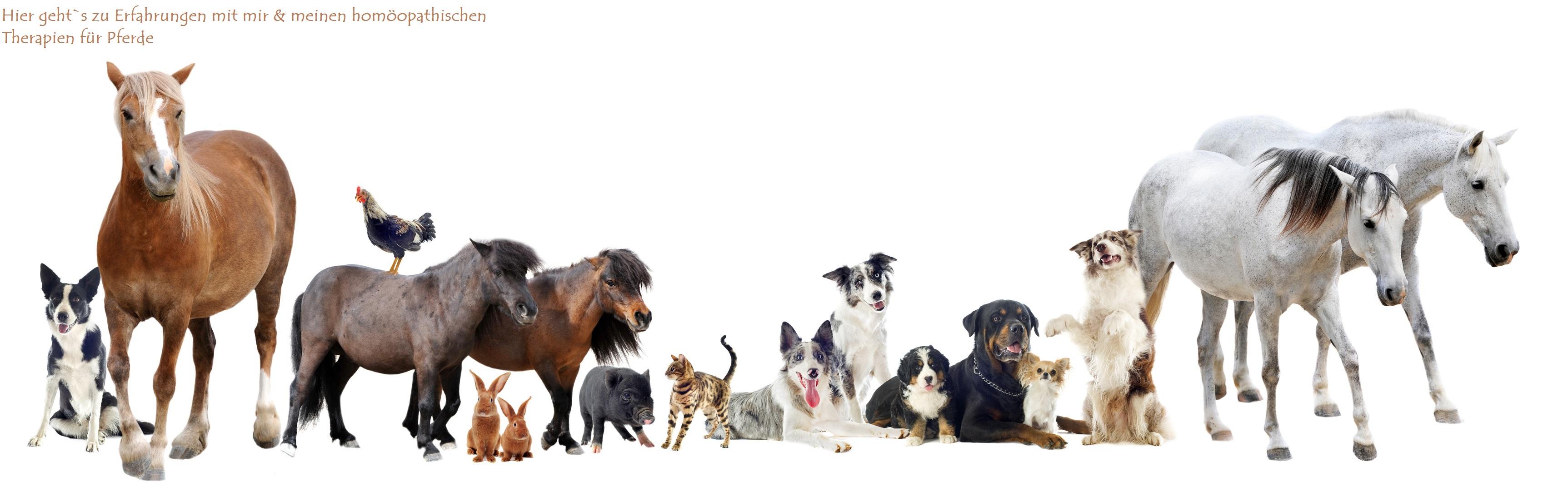 Kräuter für Tiere