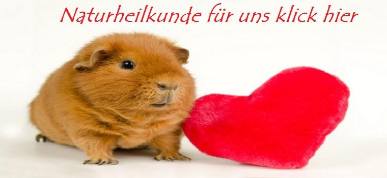 US-Teddy Meerschweinchen mit Plüsch-Herz