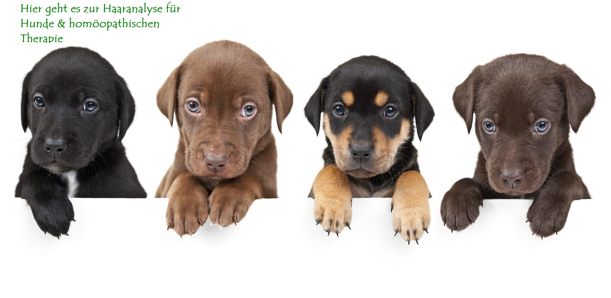 Hormone bei Hunden