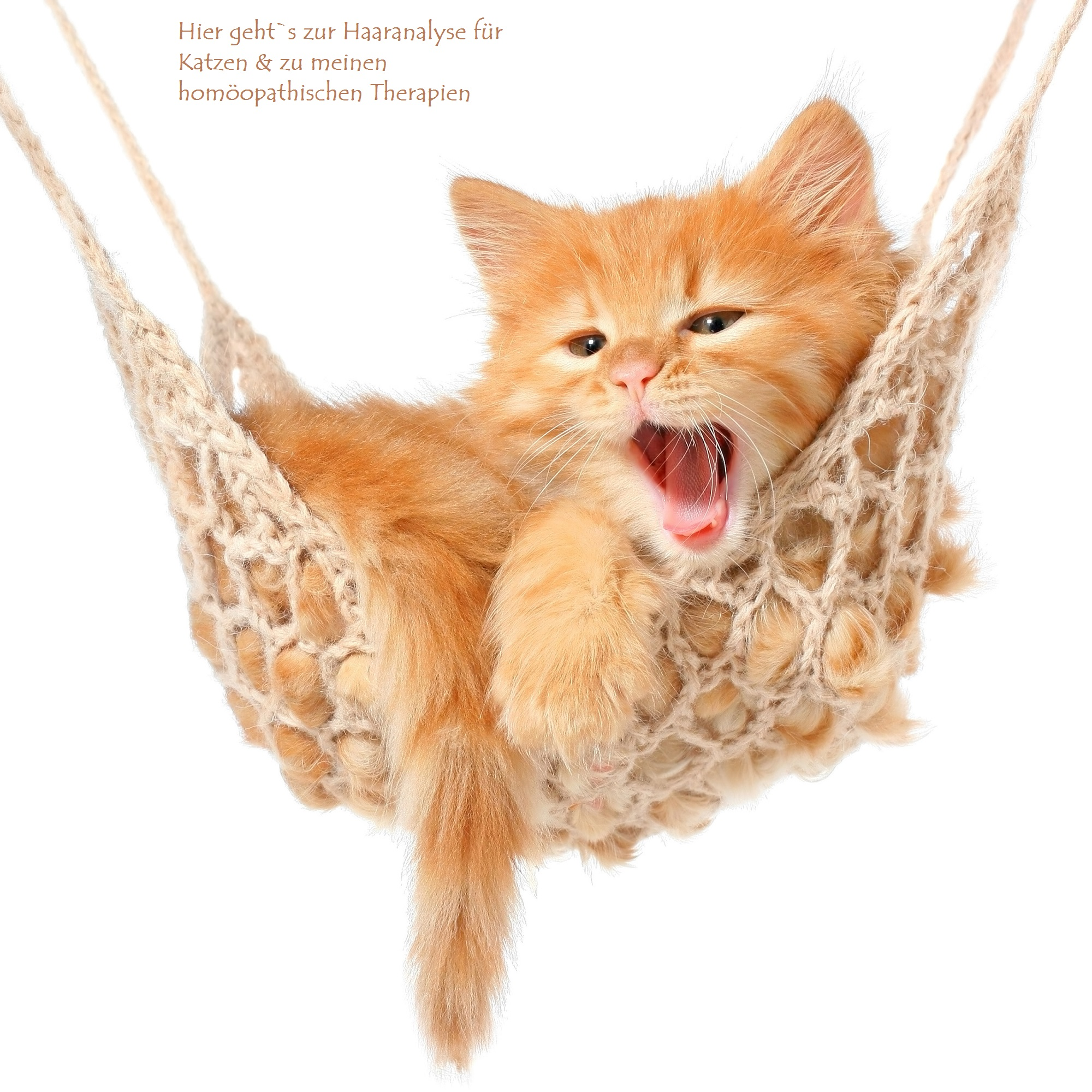 Hormone bei Katzen