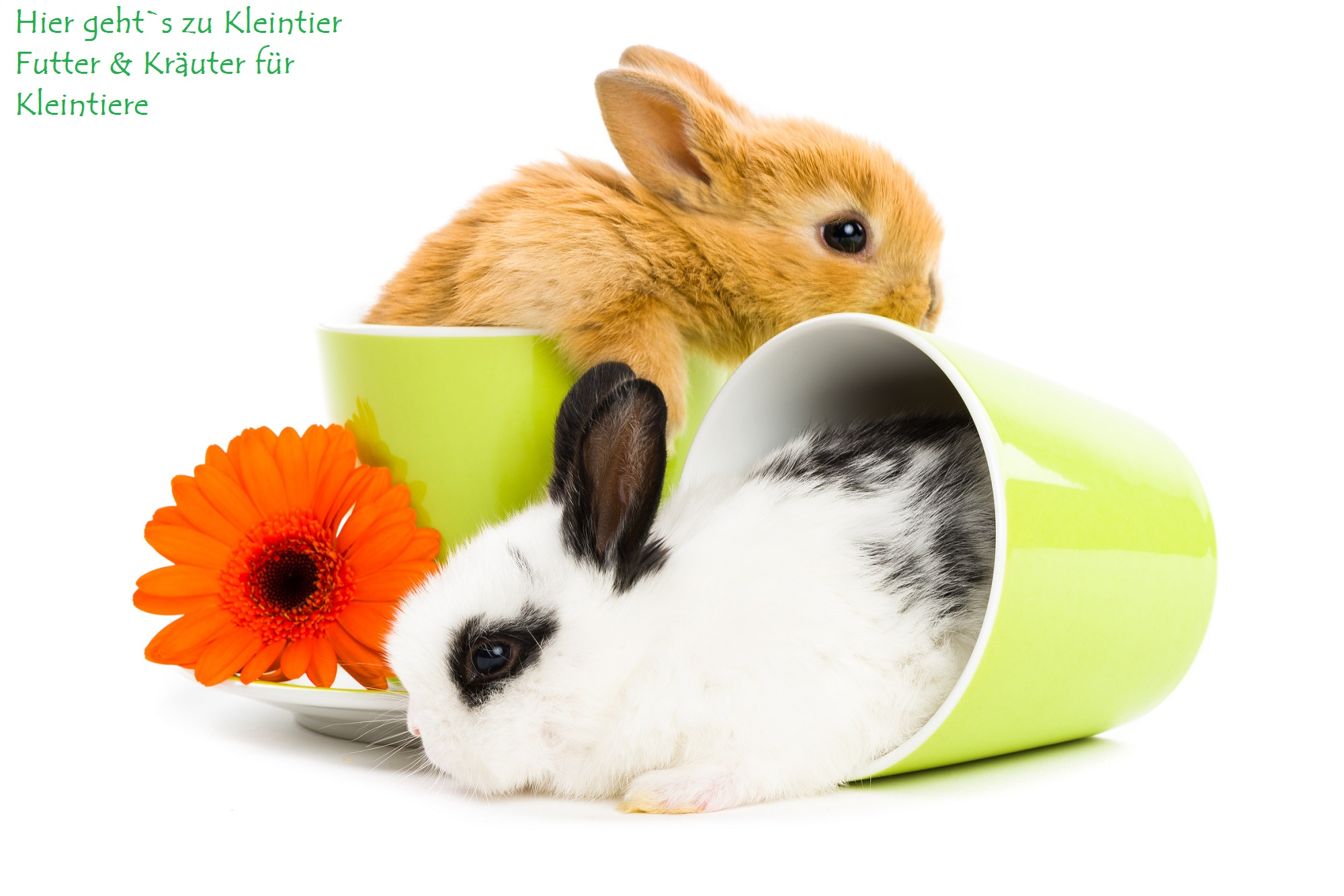 Kräuter für Kleintiere