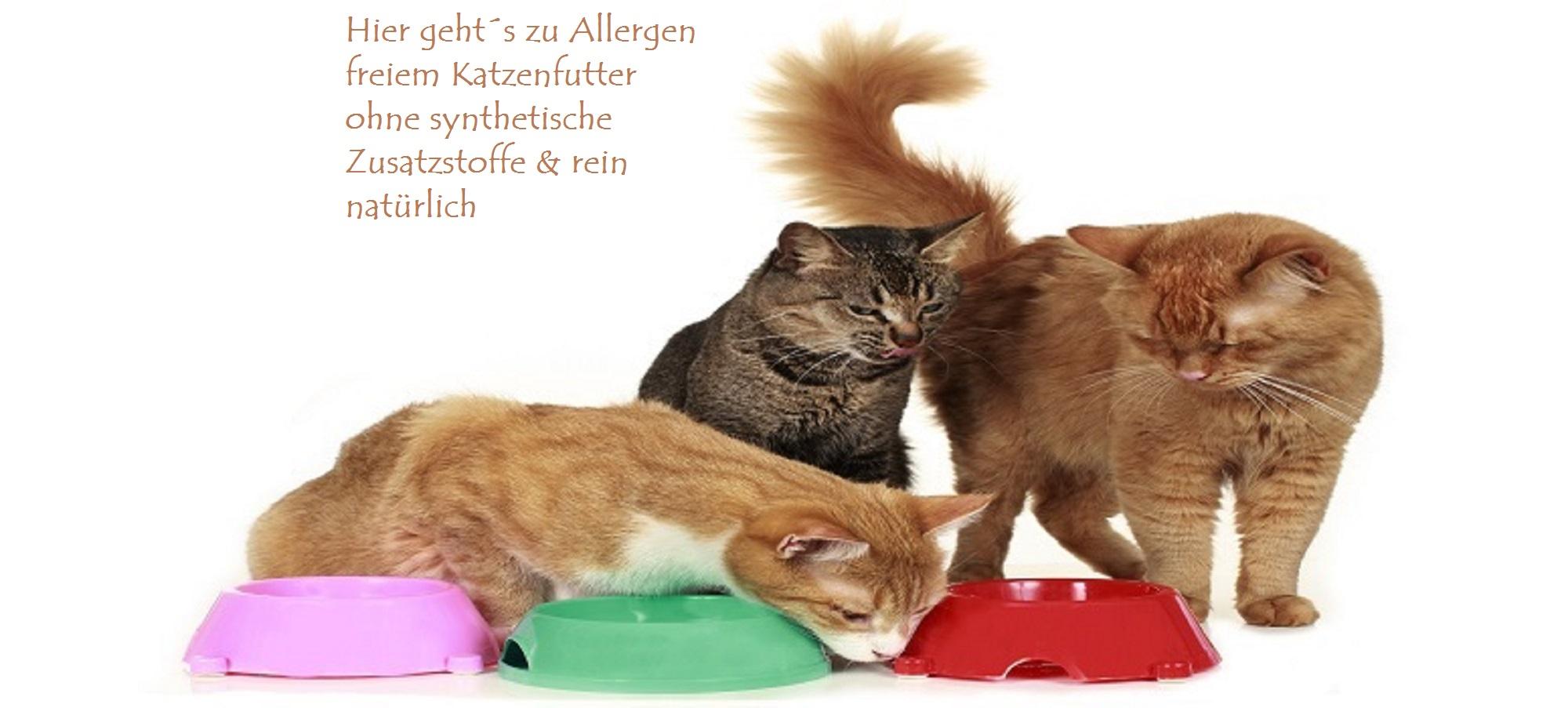 Futtermittelallergien bei Katzen