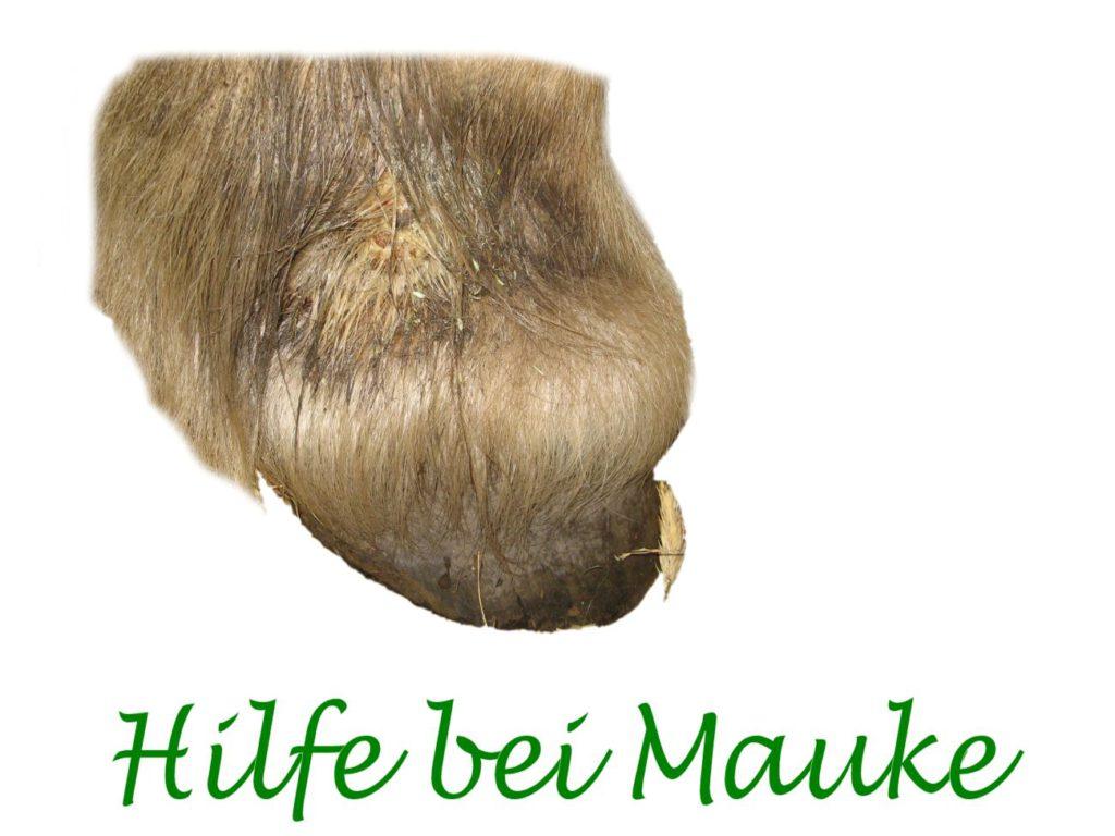 mauke-blog