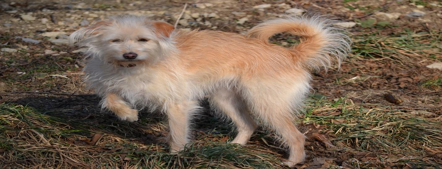 ... , Haarausfall, stumpfes und struppiges Fell und Juckreiz bei Hunden