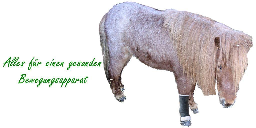 Arthrose beim Pferd