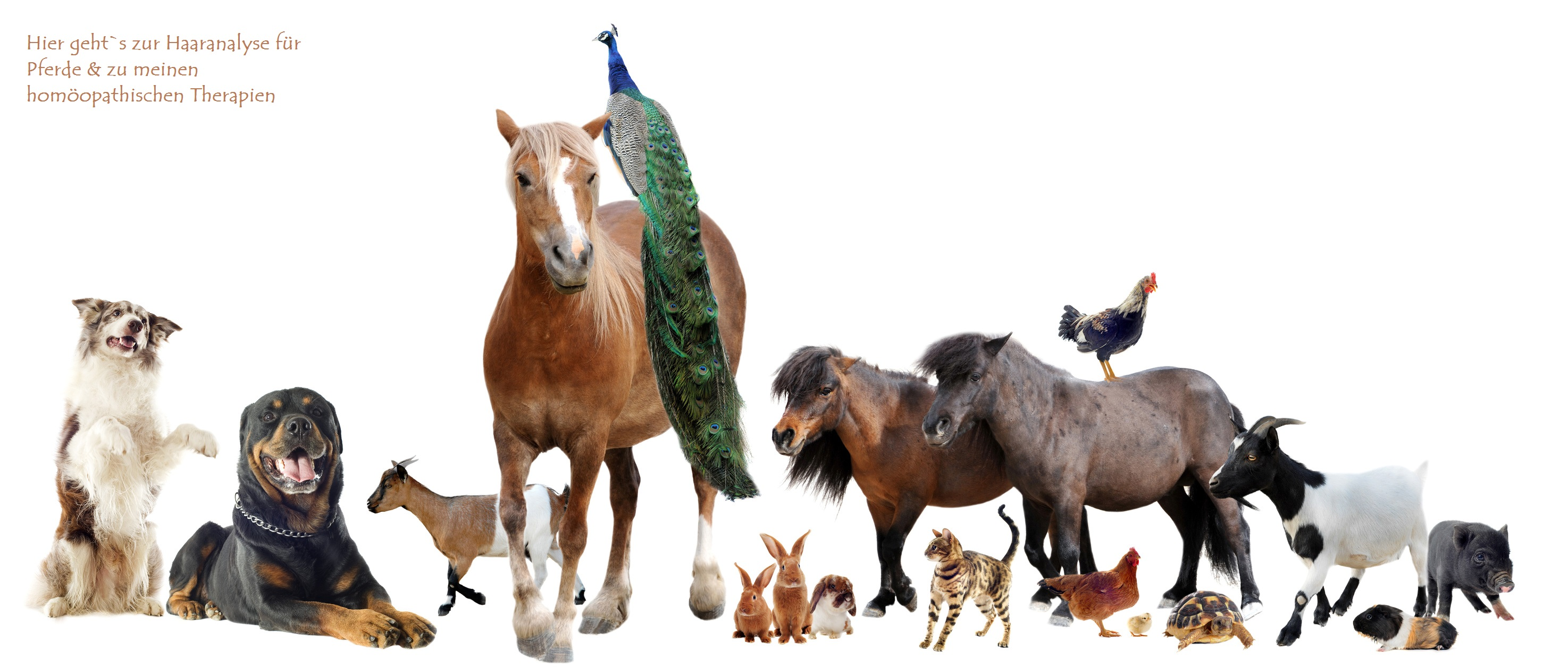 Stoffwechselkrankheiten bei Pferden