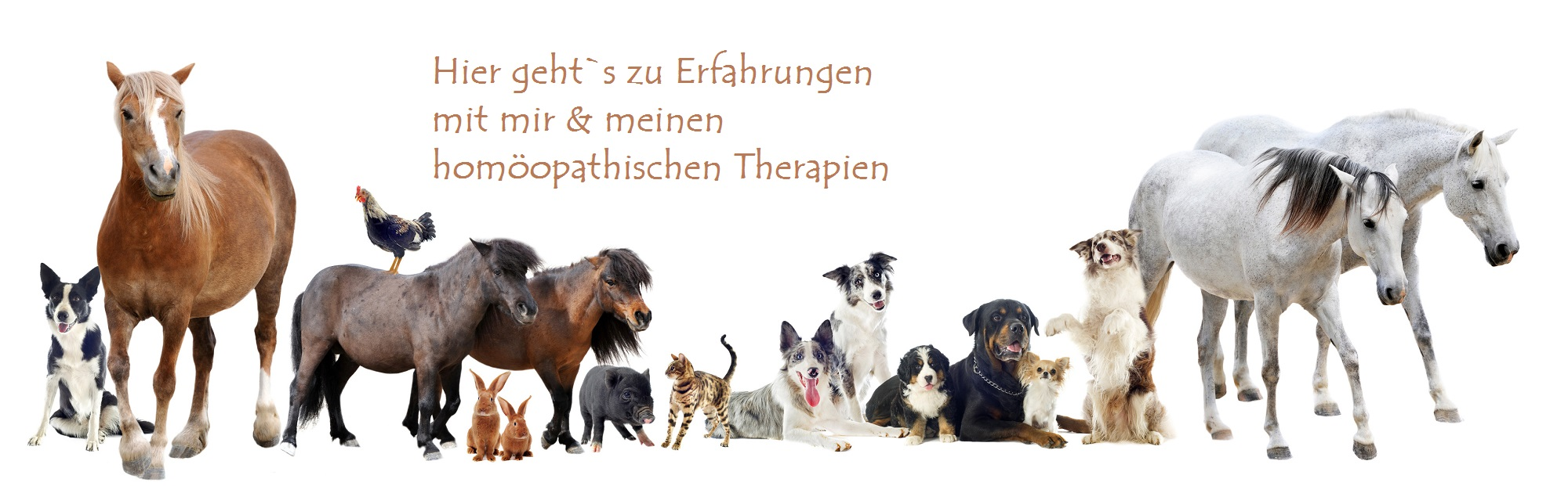 Tierheilpraxis