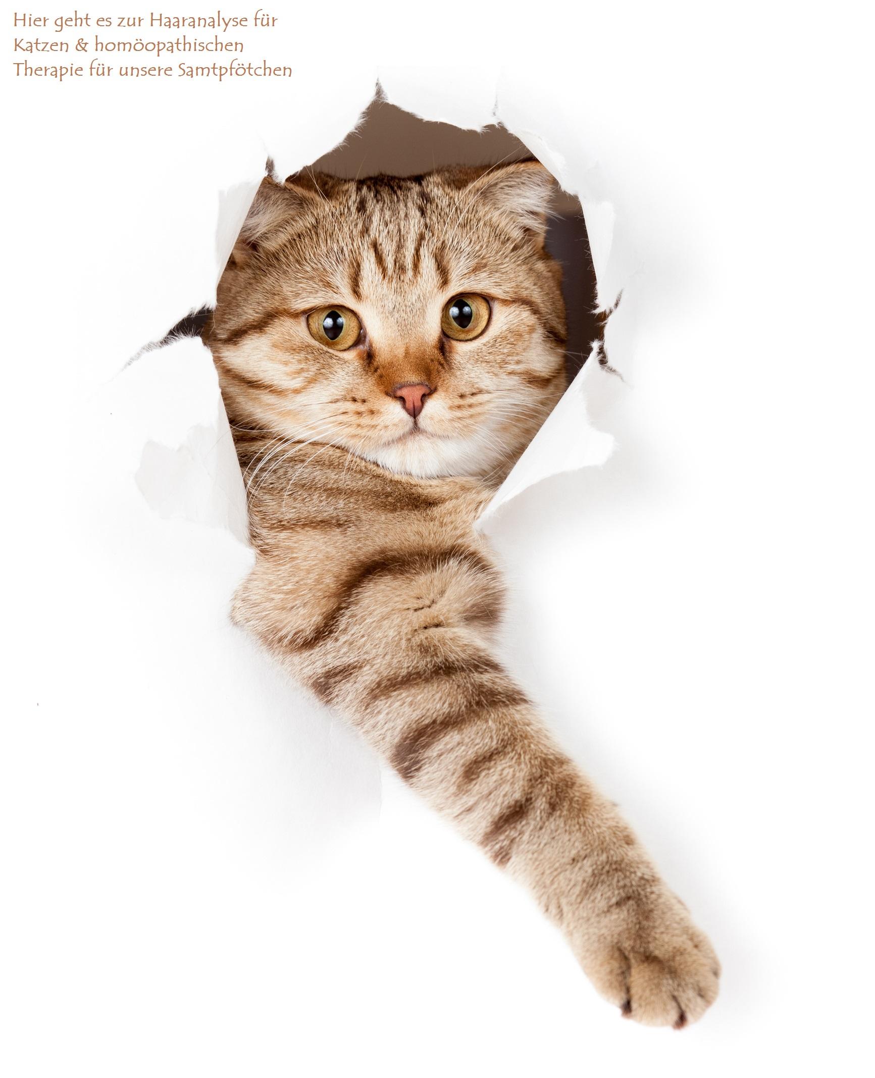 Herz Kreislauerkrankungen bei Katzen