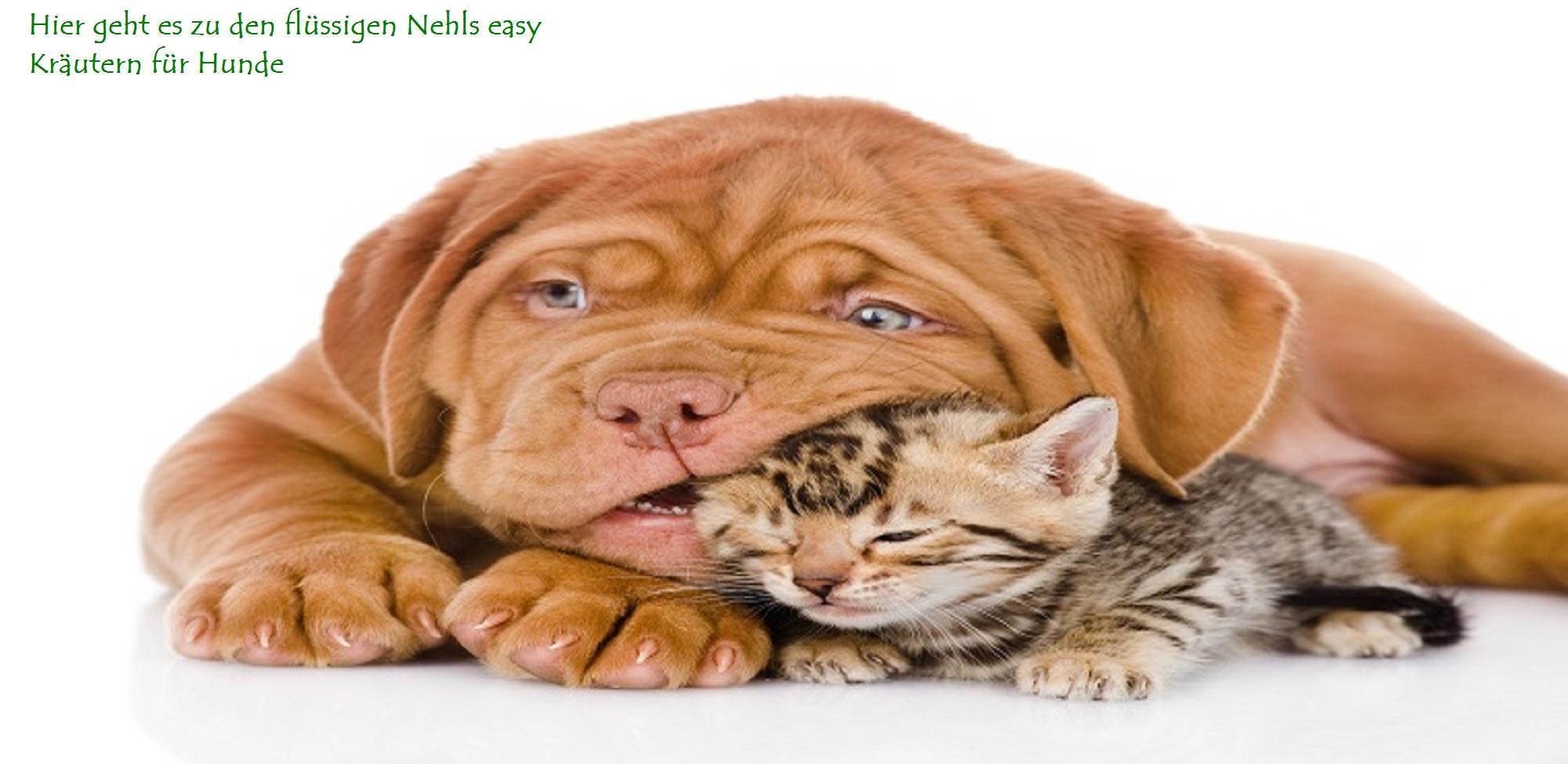 Verhaltensstörungen bei Hunden