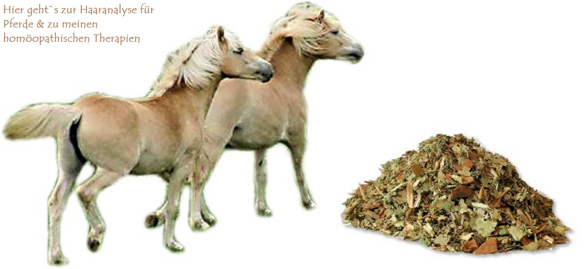Pferde mit Equinem metabolischen Syndrom