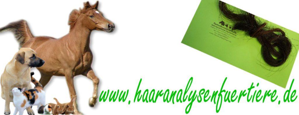 haaranalysen für hunde