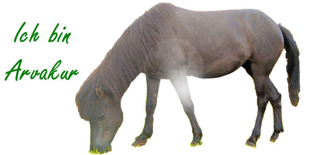 Kotwasser bei Pferden