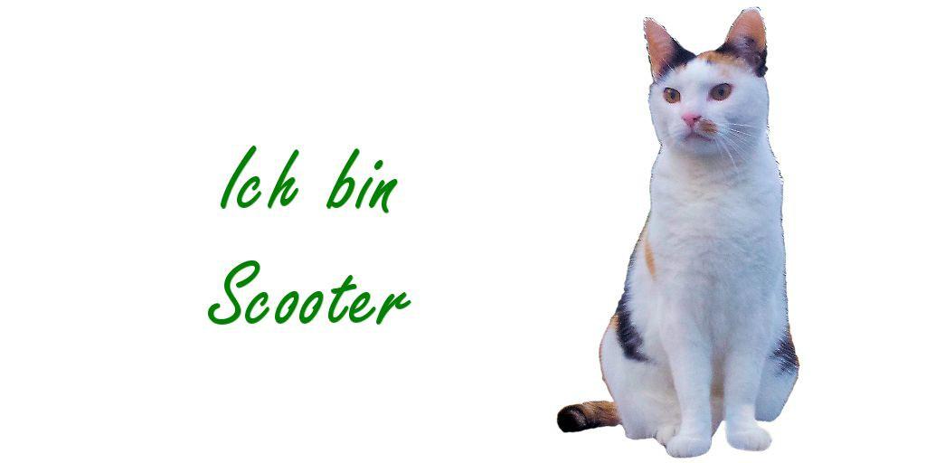 Darmsanierung bei Katzen