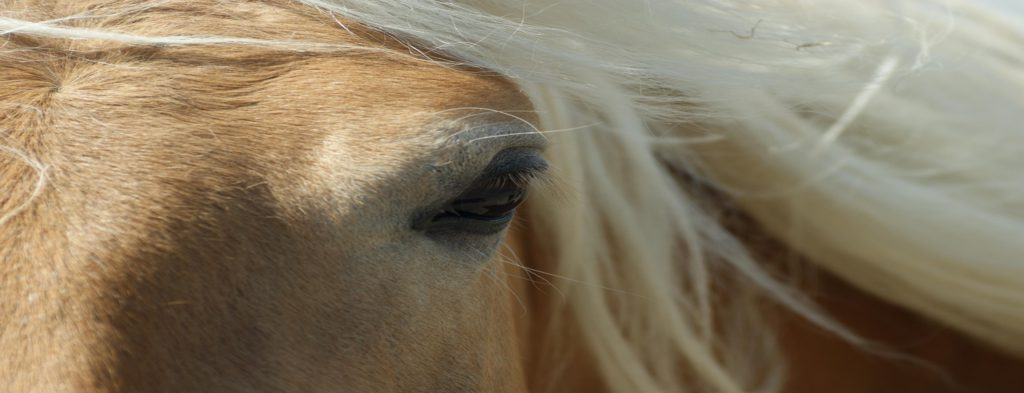 Stoffwechselkrankheit Pferd