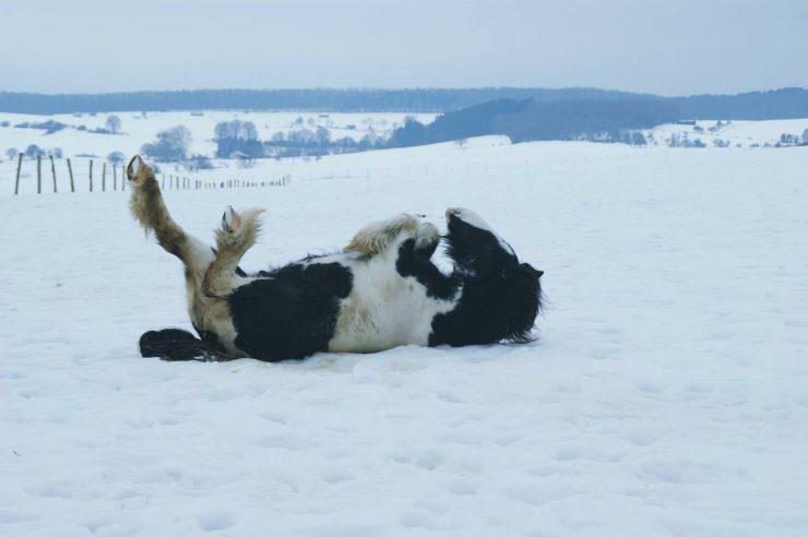 Pferde im Winter richtig füttern